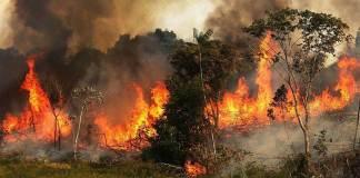 El avión cisterna más grande del mundo aterrizó el viernes en Bolivia para combatir los incendios forestales que afectan a más de 744.000 hectáreas de bosques, cultivos y pastizales en el oriente del país.