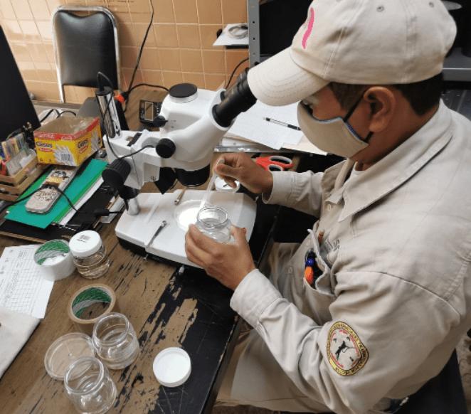 En combate al dengue, se han eliminado más de dos millones de huevecillos del mosco transmisor