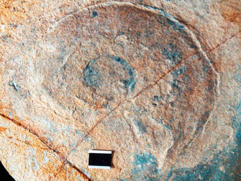 Hallan restos fósiles marinos del periodo cretácico en Zimapán, Hidalgo
