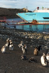 Returning to the boat, the penguins aren't too concerened by our presence