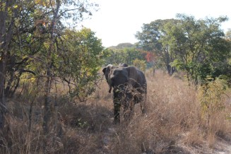 Elie the Elephant