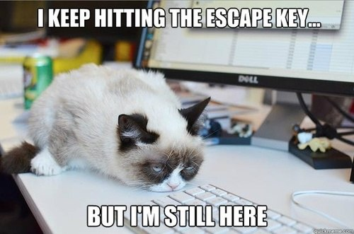 grumpy-cat-escape