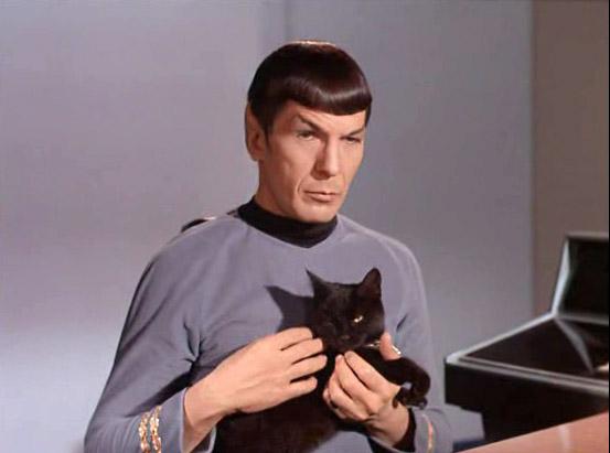 spock_cat
