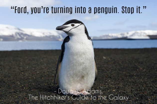 hitchhikers-penguin