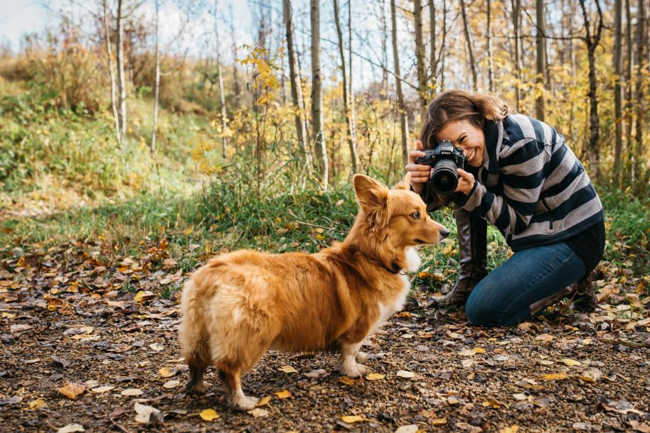 Edmonton Pet Photographer Amanda Schulz photographs her corgi puppy, Daisy.
