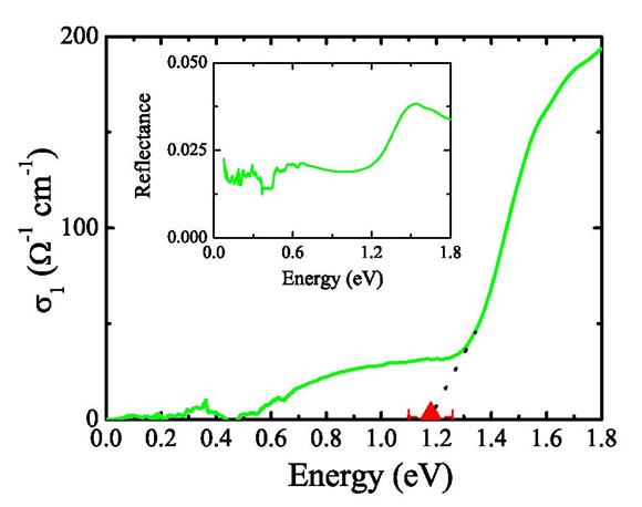 Optical Properties of Molecule-Based Magnets
