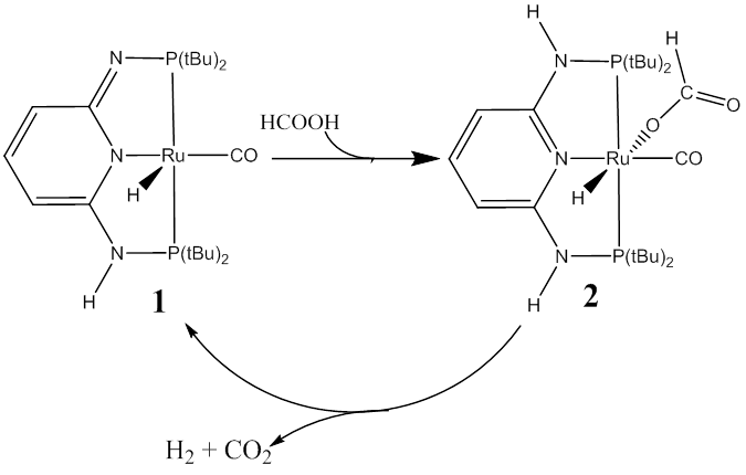 Report: Reaction Mechanism of C-H Activation of Fe