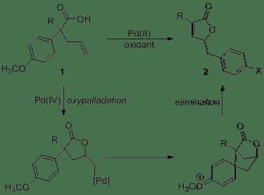 Report: Development of a Palladium-Catalyzed Oxidative