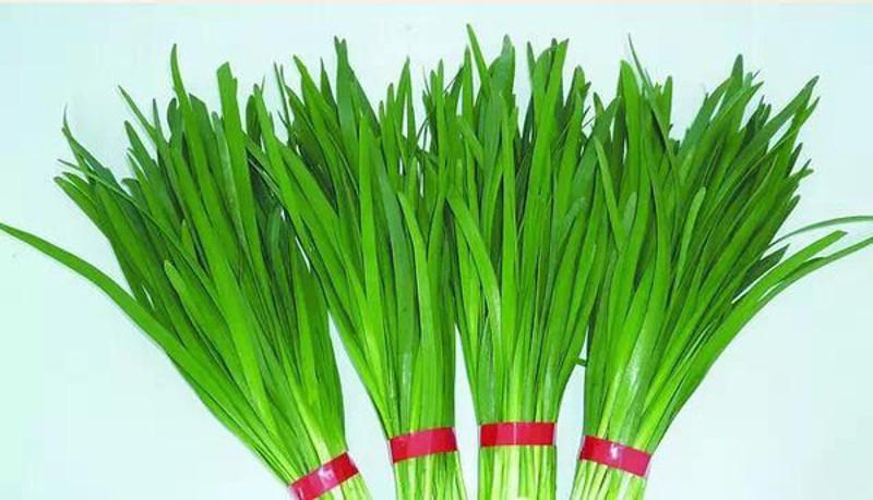"""韭菜是菜。卻不是一般的菜。這里面隱藏了什么奧秘?   """"信望愛""""動網370"""