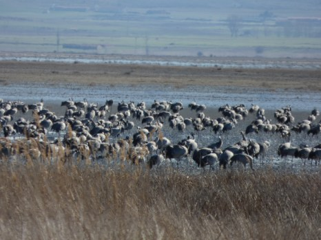 Excursiones a medida Actio Birding 10