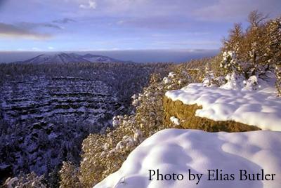 Walnut Canyon (Photo by Elias Butler)