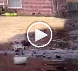 Video: Another Tar Sands Disaster