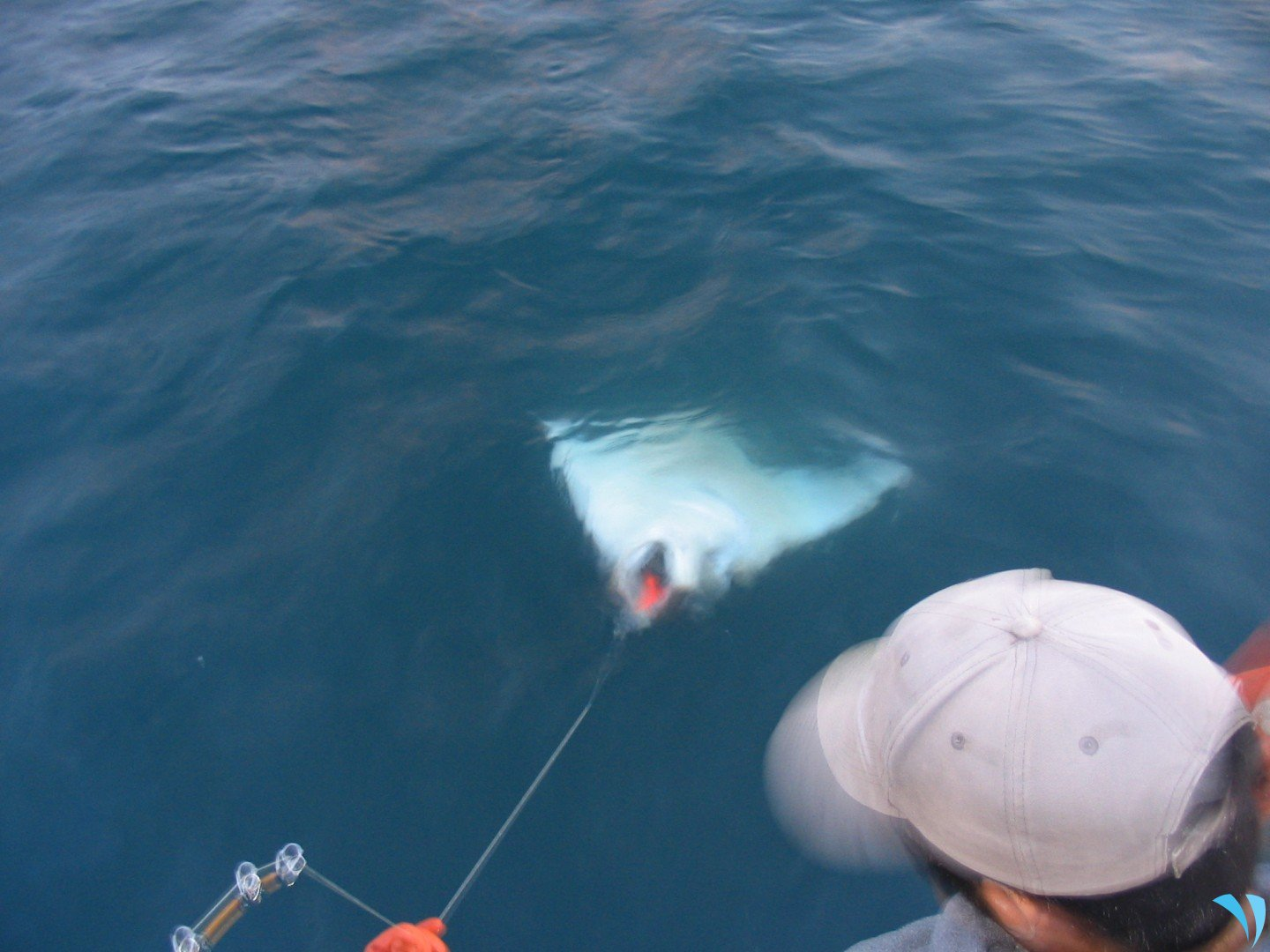 Here's What You Need to Know for Alaska Halibut Fishing