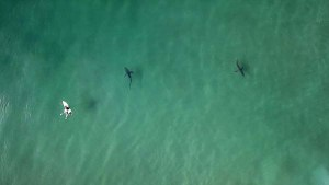 3-minutes of Sharks Circling Surfers in Durban, South Africa