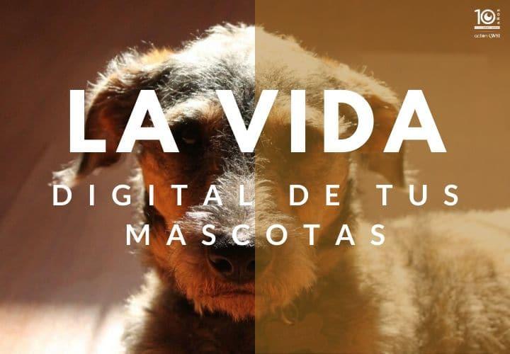 Animales en redes sociales
