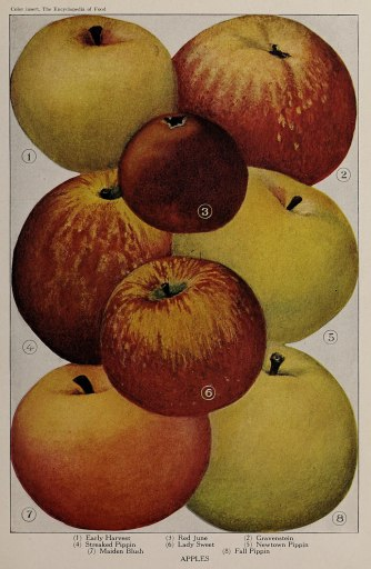 All the apples in this image are different - people who learn Alexander Technique choose to be different.