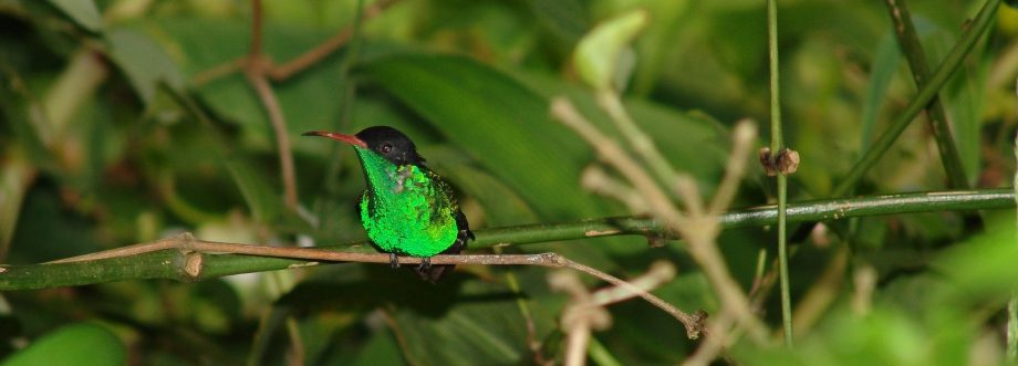 Plan your vacation with Active Caribbean Travel – Discover Jamaica's natural beauty by viewing its Flora and Fauna