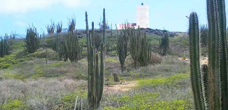 Plan your vacation with Active Caribbean Travel – Discover Bonaire hiking on Washington Slagbaai National Park Trails