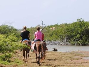 Plan your vacation with Active Caribbean Travel – Discover what Bonaire has to offer. Visit nature reserves and see parrots and flamingos or enjoy festivals, heritage sites, site-seeing tours and more.