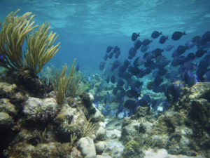 Plan your vacation with Active Caribbean Travel – The best Jamaica Diving / Dive Sites, Boat Operators plus general island info. Plan your trip today!