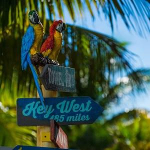 Parrots at Margaritaville Beach Resort
