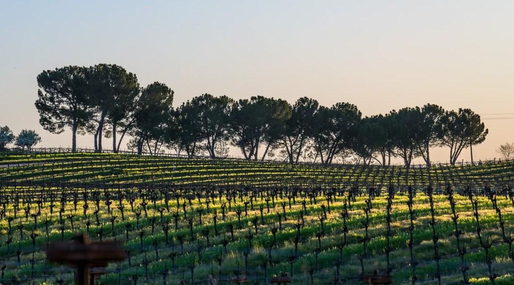 Bianchi vineyard Paso Robles