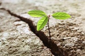 Adversity Plant