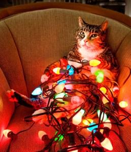 Cat Xmas Lights