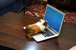 Students as guinea pigs?