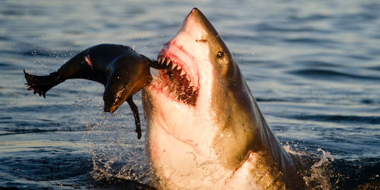 beware of the shark infested waters of northern california s