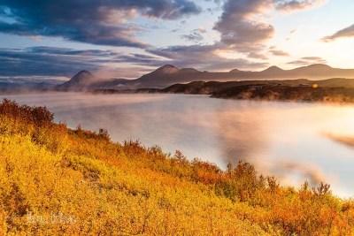 Image of golden vegetation with views of Alaska Range