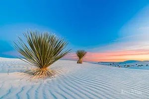 View the yucca and wind patterns in sand at sunset - White Sands National Park