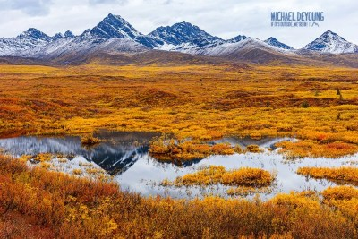 Deep golden tapestry with light dusting of snow on part of the Alaska Range. © Michael DeYoung