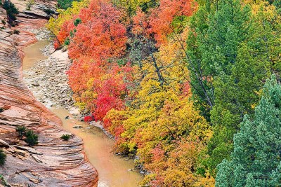 Fall colors along east side of Zion National Park ©Michael DeYoung