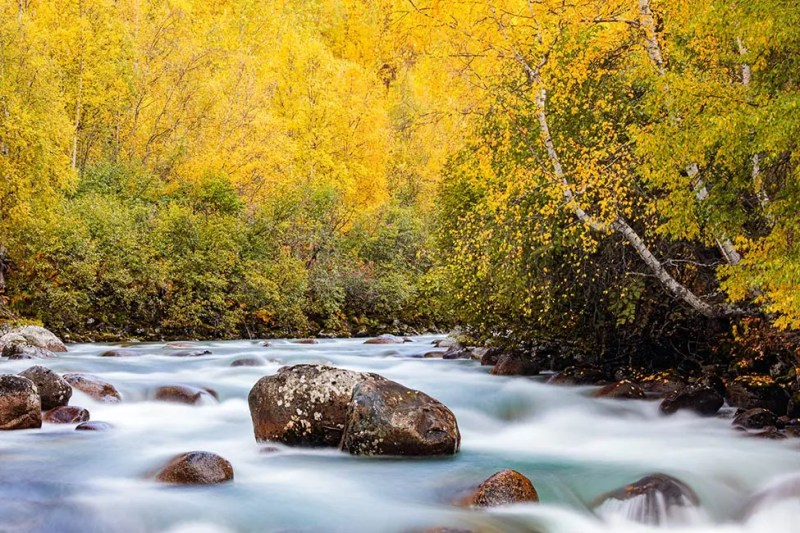 Little Susitna River lined with trees in peak fall colors in Alaska. © Michael DeYoung