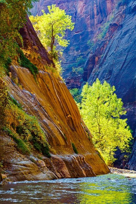 Backlit cottonwood trees in Virgin River Narrows in Zion National Park. © Michael DeYoung