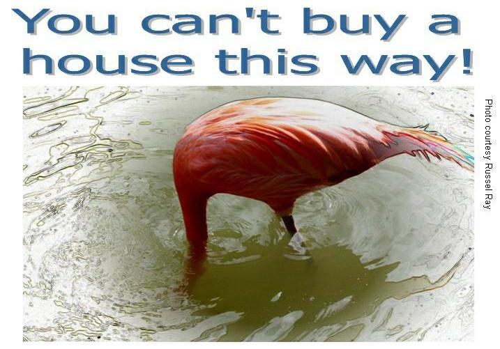 Flamingo underwater