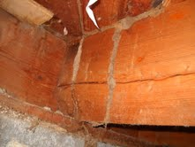 Mud Tube- By Eastern Wash Home Inspections- Dennis C.