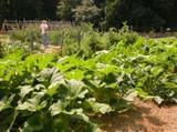 Woodstock GA community garden image