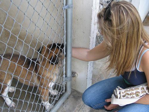 town lake animal shelter