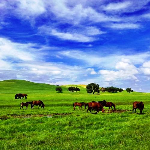 Wyjazdy do Mongolii