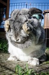rabbit-963167_1920