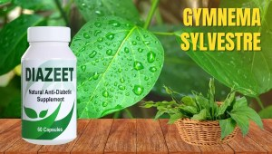 Gymnema Sylvestre for diabetes - Diazeet