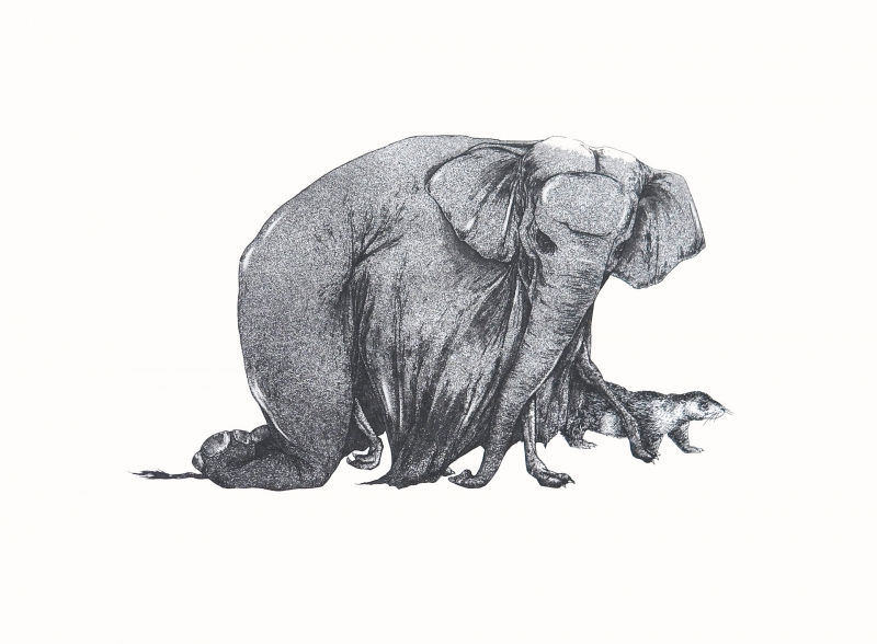 Nelly Stetenfeld : L'éléphant