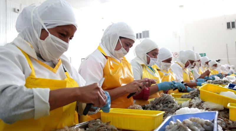 Macrorrueda de negocios de pesca y acuacultura generará más de 200 citas entre exportadores locales y compradores internacionales