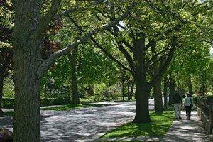 tree-lined-street_0ak