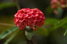 Jardin de Coconi, fleur,