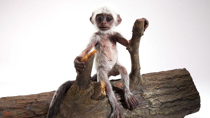 animatronique singe