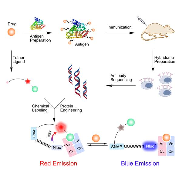 Antibody Biosensor