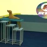 Escada de Piscina para Pet